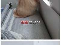 고양이가 집에 불냈다
